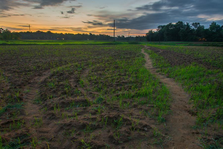 Munnar: Fresh Air, Green Hills and Some Birds
