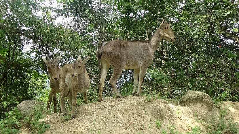 A Family Tour: Kannur To Munnar / Alappuzha (Kerala)